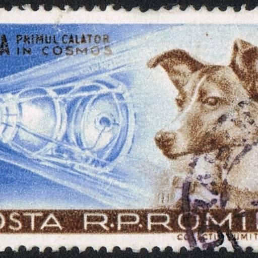 Laika foi o primeiro ser vivo a viajar pelo espaço a bordo do Sputnik 2