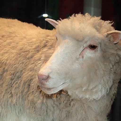 Faleceu a ovelha Dolly