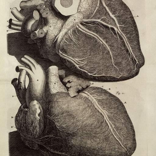 Foi realizada a primeira operação de peito aberto ao coração