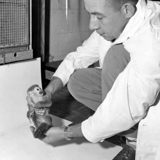 Foi lançado o foguetão Júpiter, com um macaco a bordo