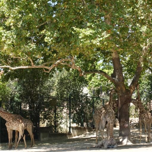 Foi inaugurado o Jardim Zoológico de Lisboa