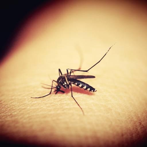 Foi descoberto o parasita que provoca a Malária